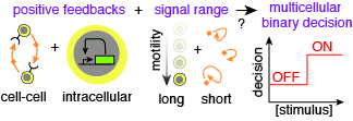 Positive feedbacks and controlling signal-range